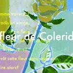 駒澤文 個展『コールリッジの花』の画像